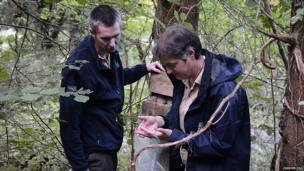 Zoo staff return the dormouse to its nest box