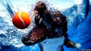 Dog underwater with tennis ball