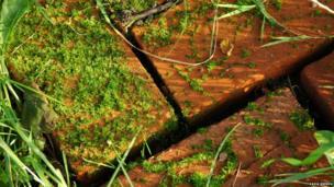 Bricks and moss
