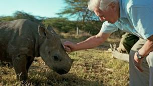 David Attenborough strokes a baby rhino