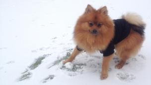 A dog with a snowball!