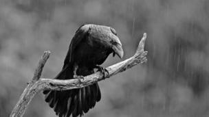 Rain Raven by Gordon Bramham from The Royal Photographic Society's 155th International Print Exhibition
