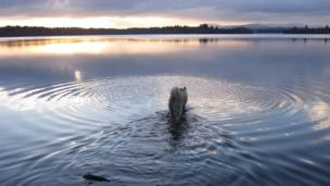 Freya the dog wanders into the Lake of Menteith