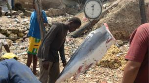 A shark in weighed in Mombasa port, Kenya