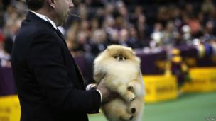 A man in a suit holding a Pomeranian dog during the show