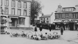 Sheep in Llanwrtyd