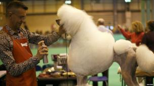 A man grooms a poodle during the second day of the Crufts Dog Show in Birmingham, central England March 8, 2013