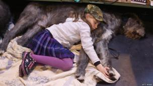 Caitlin, aged 9, sleeps on her Irish wolfhound on the first day of Crufts dog show at the NEC on March 7, 2013 in Birmingham, England. The four-day show features over 25,000 dogs, with competitors travelling from 41 countries to take part. Crufts, which was first held in1891, sees thousands of dogs vie for the coveted title of Best in Show.