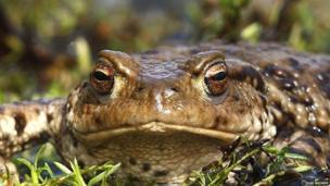Toad at Attenborough Nature Reserve