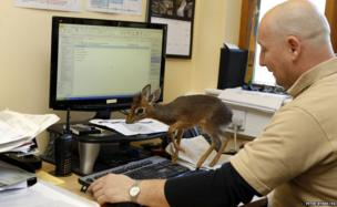 Tim Rowlands and a baby Dik Dik which was abandoned by its mother. PRESS ASSOCIATION Photo. Picture date: Tuesday March 12, 2013. See PA story ANIMALS Dik Dik