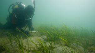 Esther Tyson diving at Studland
