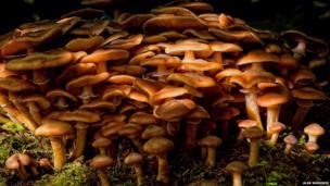 Fungi by Alan Warriner