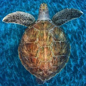 Turtle gem ©Jordi Chias Pujol (Spain)