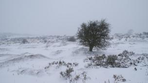 Blizzard conditions on Halkyn Mountain in Flintshire on Friday.