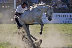 A gaucho rides a bucking colt during the traditional rodeo week in Montevideo