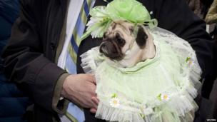 Chloe the dog wearing a special Easter bonnet