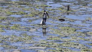 A man collect shellfish on a beach near Kenya's Mombasa city on 9 April 2013