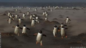 Penguins waddling around on ground in a smoky setting
