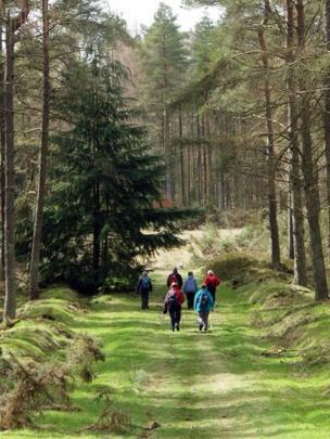 People walking through woods