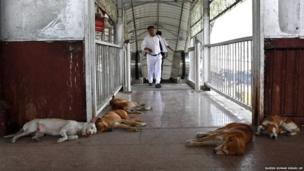 Stray dogs sleep in the premises of a railway station to escape the heat in Allahabad, India, Monday, May 20, 2013. Severe heat conditions are prevailing across northern India with temperatures soaring past 45 degrees Celsius (113 Fahrenheit) at several places.