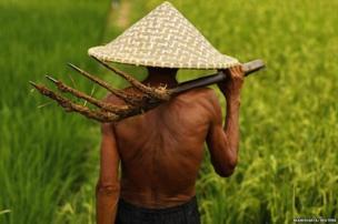 A farmer walks through a rice field in Karawang, Indonesia's West Java province