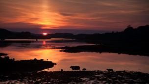 Sheep in sunset