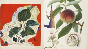 Wild Blackberries [L] and Penitent Peach