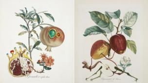 The Pomegranate and the Angel and Dragon Apple