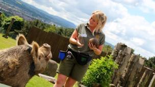 Audrey the pig at Edinburgh Zoo
