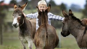 Micro miniature donkeys enjoy a stroke