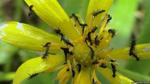 Larvae. Pic: John Walters