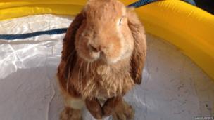 Winston the rabbit. Photo: Maddie Vertente and Matt York