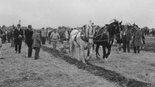 Horses at the 1968 Great Dorset Steam Fair