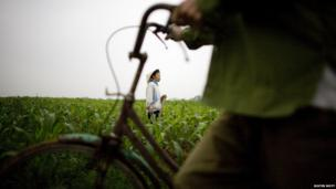 A farmer works in a corn field in Xuan Canh village near Hanoi, Vietnam.