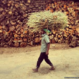 Man carry wood on his head