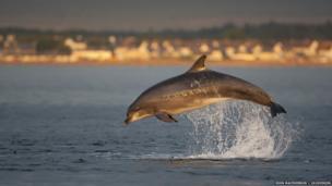 Bottlenose dolphin / John MacPherson / 2020VISION