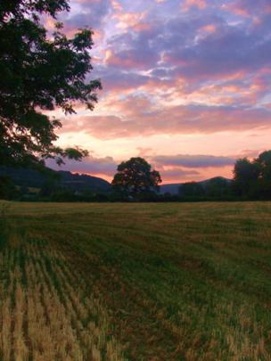 Newly-cut barley field