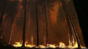 Fire consumes trees along US highway 120 as the Rim Fire burns out of control on 21 August, 2013 in Buck Meadows, California