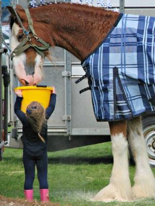 Girl and horse at Peebles Agricultural Show
