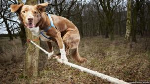 A dog balancing on a tightrope.
