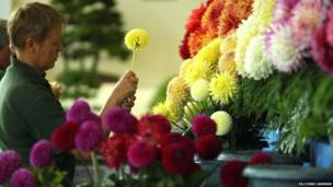 Preparations are made for the start of the autumn flower show at The Great Yorkshire Showground. Lynne Cameron/PA Wire