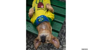 Eight-year-old female dog Pulguinha sleeps with the Brazilian football team jersey on a bench in Rio de Janeiro, Brazil