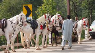 Horses lined up by their owners to carry passengers around