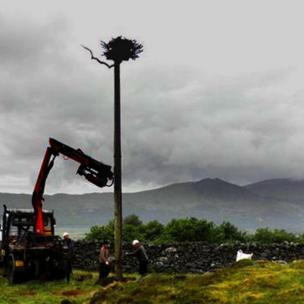 nest being craned into position
