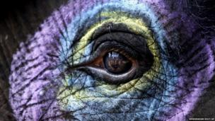 The eye of a decorated elephant
