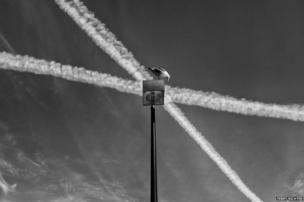 The lines of two crossing contrails converging with that of a lamp post