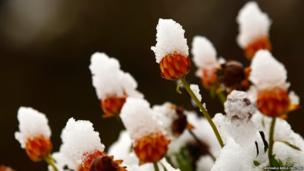 Flowers covered with snow