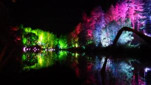 Forest lit by coloured lights