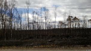 Burnt trees. Photo: Amy Irwin