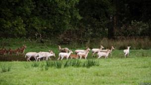 Fawns at Parkanaur Forest Park, County Tyrone - by Amanda Killen